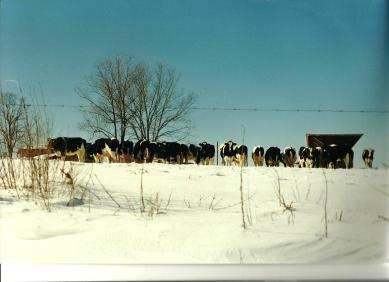 In 1997 we still had cows up here at the house.